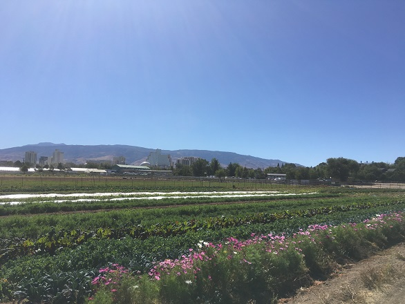 DFI Farm and Reno City