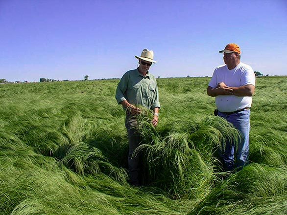 teff field in fallon nevada