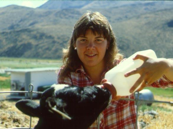 bottle feeding calf