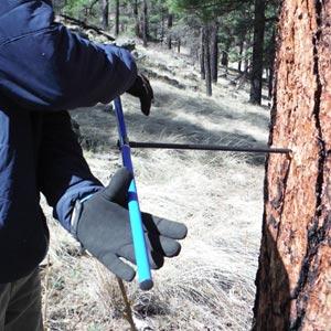 coring trees