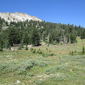 great basin meadow