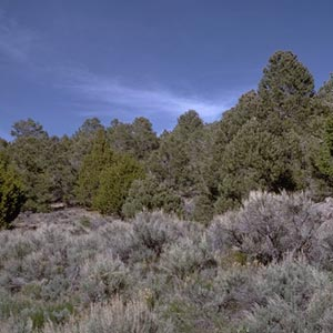 pinyon-juniper woodlands